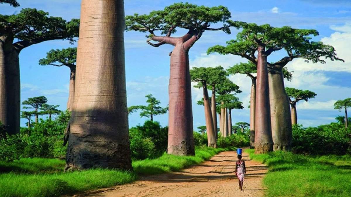 Екзотичний Мадагаскар: чим цікавий червоний острів для туристів