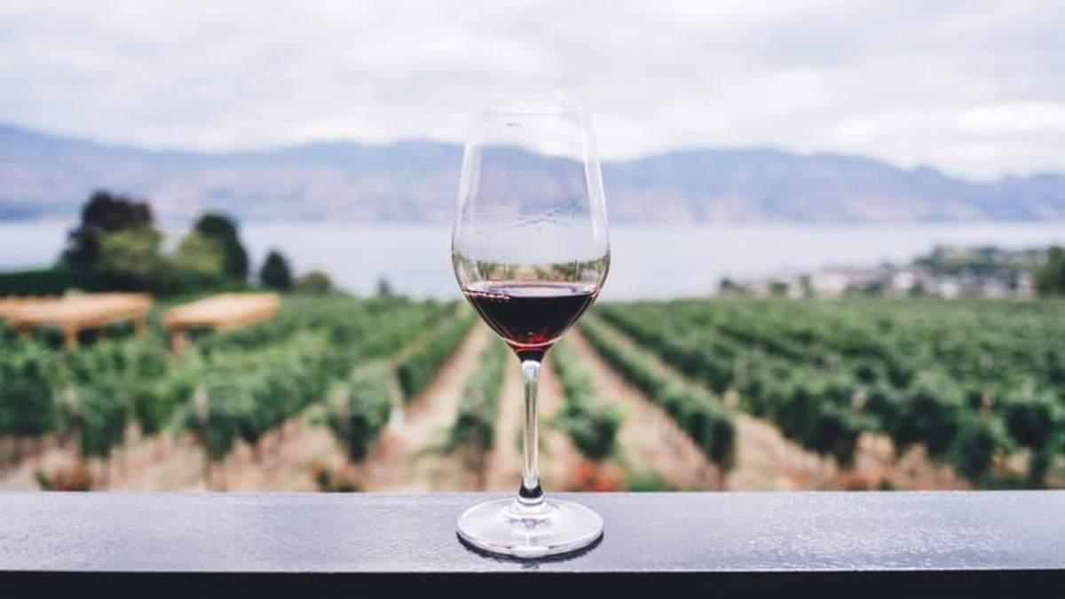 Винотур півднем України