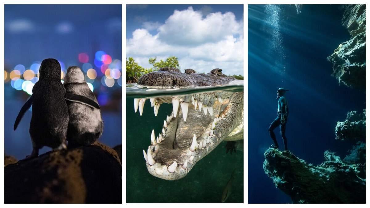Удивительная жизнь Мирового океана: 30 лучших фото 2020 года
