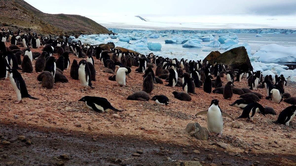 Цих фото ви не побачите більше ніде: унікальні кадри з життя на Антарктиді