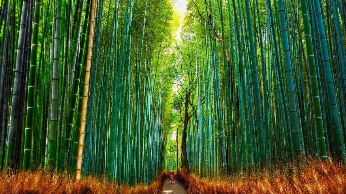 Удивительные леса планеты, что поразят ярого путешественника