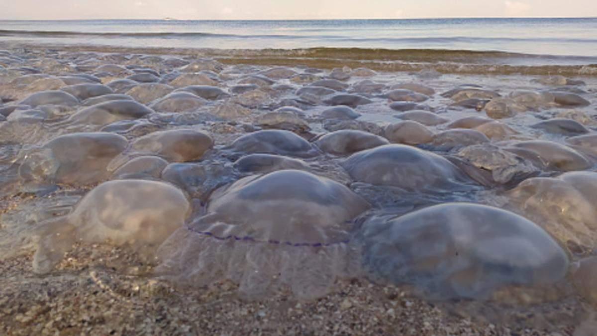 Отдых на украинском море: будет ли снова нашествие медуз в летнем сезоне 2021