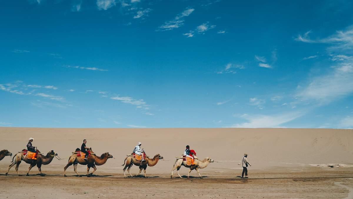 Світлофор для верблюдів