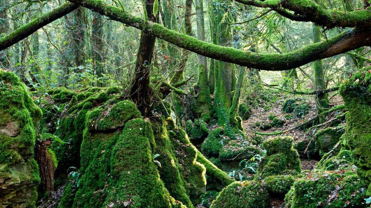 Заборонений ліс з Гаррі Поттера