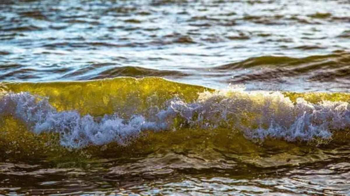 Морська вода біля двох пляжів Одеси непридатна для купання