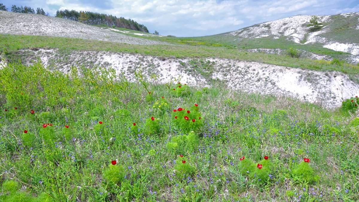 10 фактов о меловых горах на Харьковщине