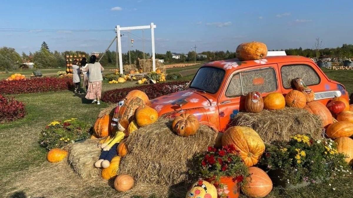 Замість тюльпанового поля: на Буковині з'явилася осіння атракція з 50 тоннами гарбузів - Новини Чернівці - Travel