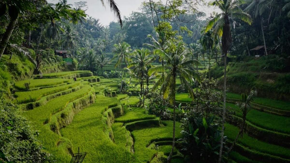 Балі відкриває свої кордони для іноземних туристів - Travel