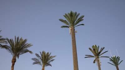 У Єгипті посилюють карантин: закривають пляжі і частково ресторани