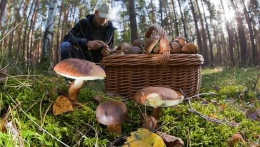 Куди поїхати на гриби у Карпати: найкращі місця осіннього сезону 2020