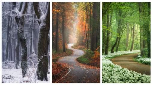 Невідомі Нідерланди: 30 фото лісових пейзажів, які заспокоюють душу