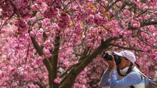 На сакури в Ужгород: як влаштувати незабутню поїздку