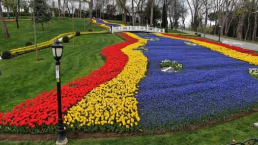 В столице Турции высадили 8 миллионов тюльпанов: цветные фото