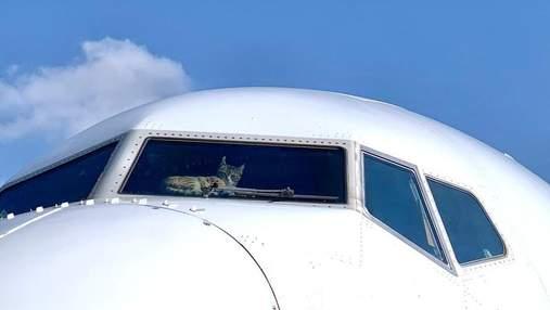 Совершили посадку из-за кота, что напал на командира: стюардесса поделилась курьезной историей