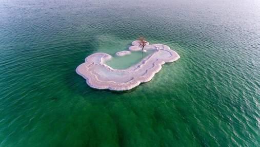 """На соляному острові посеред Мертвого моря росте """"Дерево життя"""": дивовижні фото"""