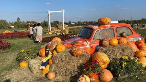 Вместо тюльпанового поля: на Буковине появилась осенняя аттракция с 50 тоннами тыкв