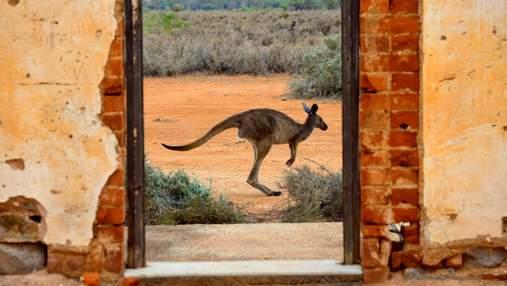 Австралія відкриє кордони, але не для всіх: деталі